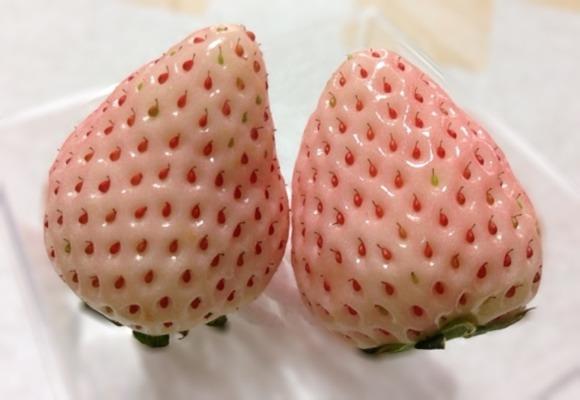 [Å] 不思議な色だ!「白いちご 初恋の香り」を食べてみた