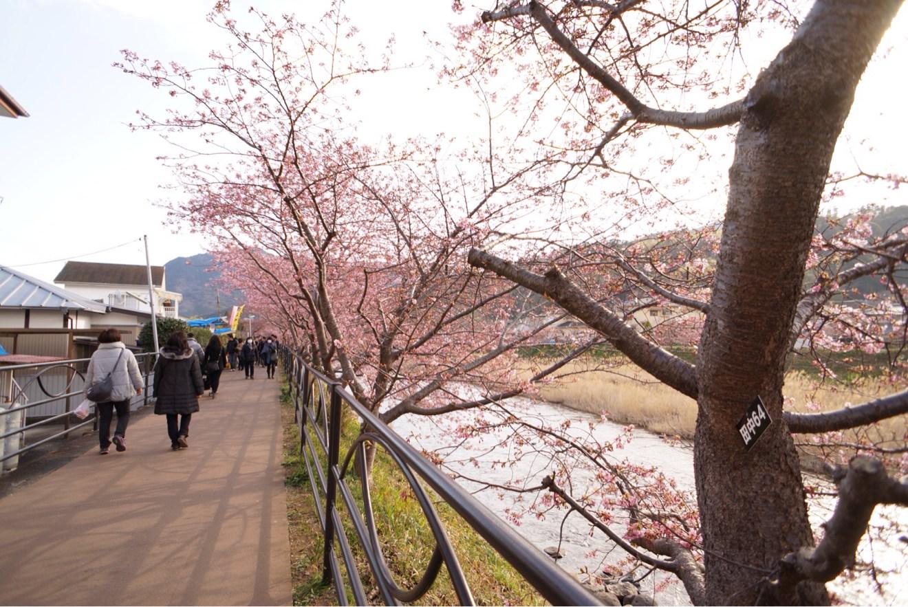 桜並木道のスタート