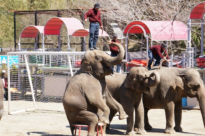 [Å] 千葉県「市原ぞうの国」で初めて象のショー見た!象好き注目観光スポット!!