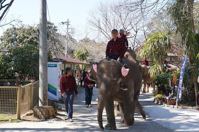 園内を移動中の象