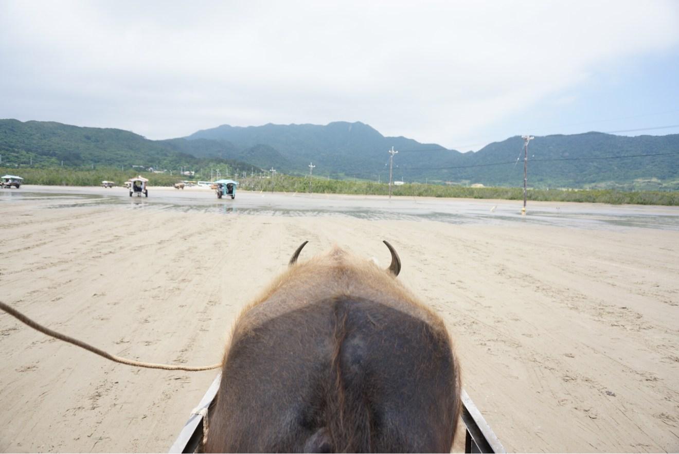 水牛からの景色