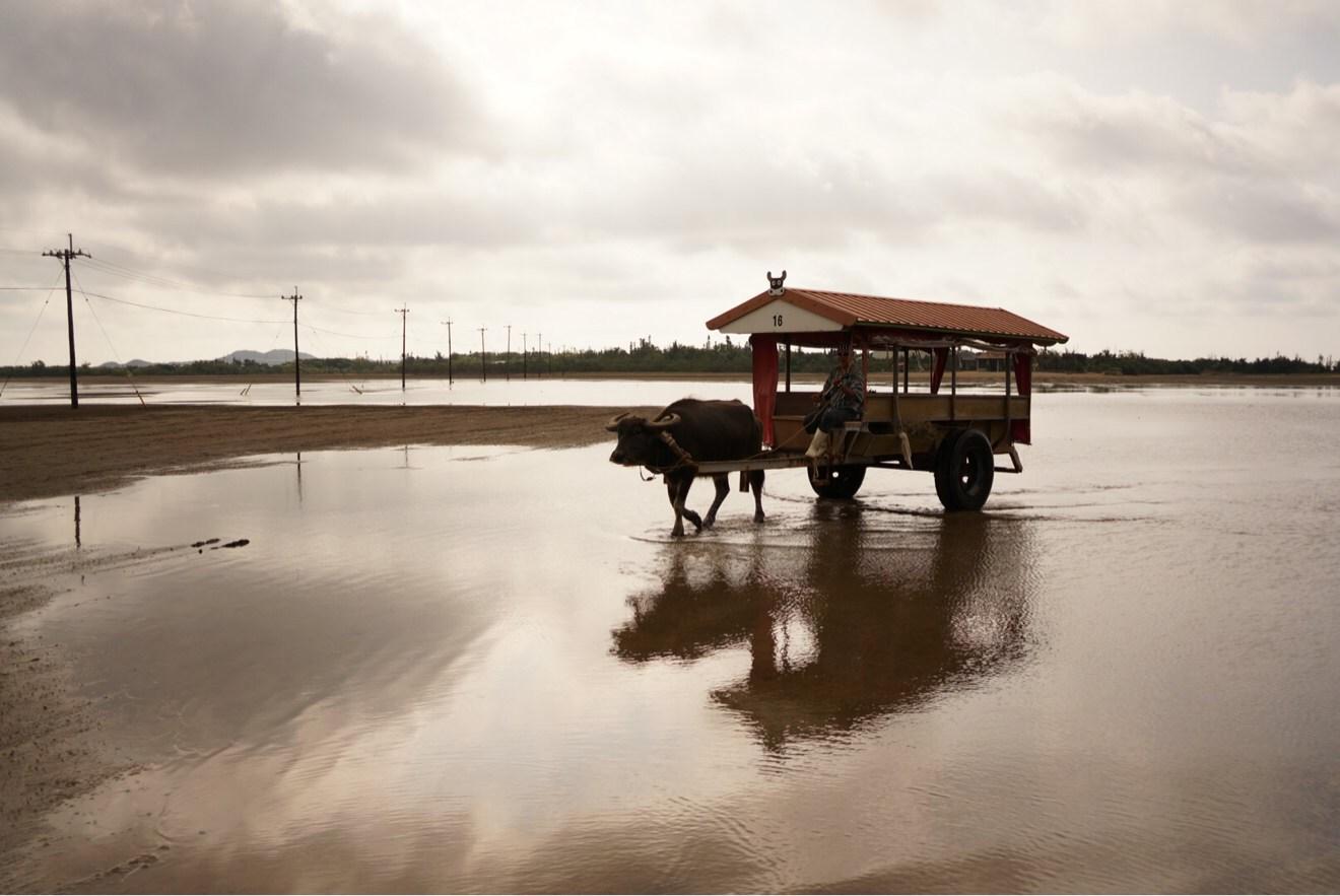 [Å] 沖縄 由布島で水牛体験!のんびり離島で過ごしたい人にオススメしたい観光スポット!