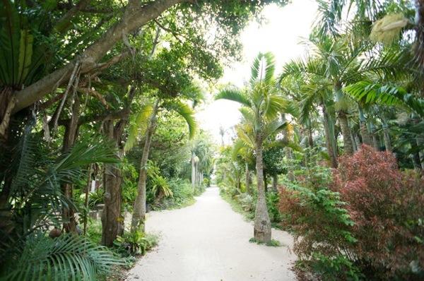 ひたすらジャングルのような道を歩ける園内