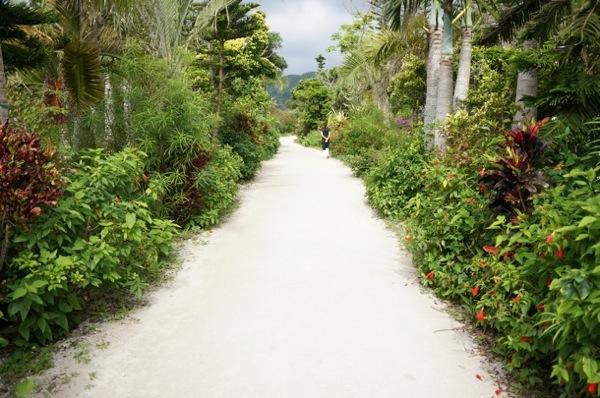 歩いてい気持ちのよい自然に囲まれた道