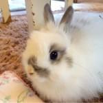 [Å] ウサギと遊べるうさぎカフェ!自由が丘「Ra.a.g.f(ラフ)」の新感覚癒しカフェ空間がステキ