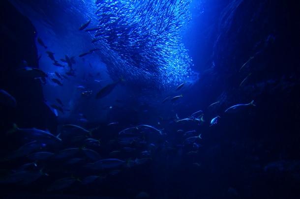 [Å] 新江ノ島水族館「ナイトアクアリウム」で水槽とコラボのプロジェクションマッピング!おすすめ時間帯はここ!