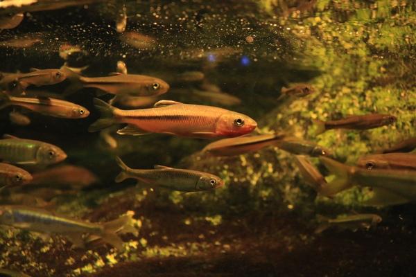 魚の群れ激写