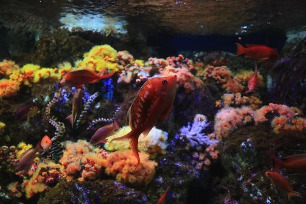 色鮮やかな魚たち