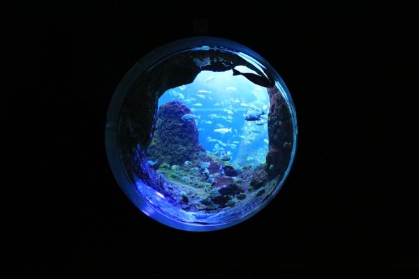 浮かぶ水槽