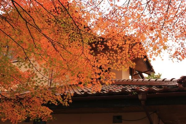お家と紅葉