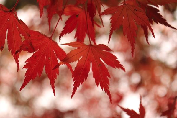 上から紅葉