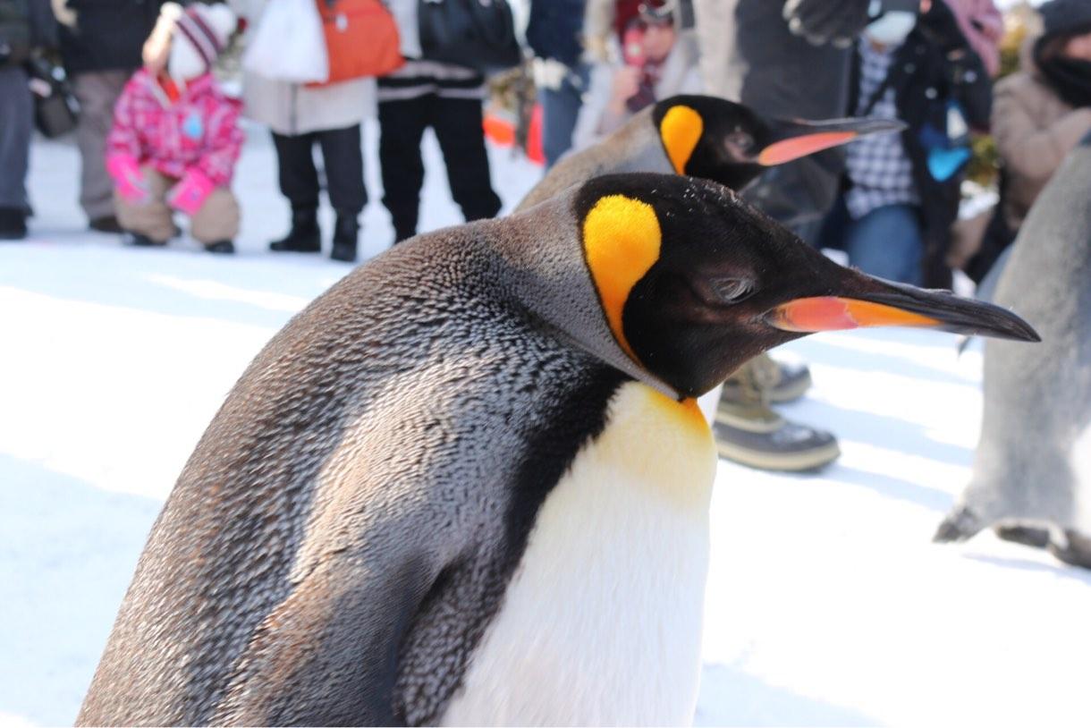 ズームなしでもこんなに近くペンギンが撮れる距離に大接近!