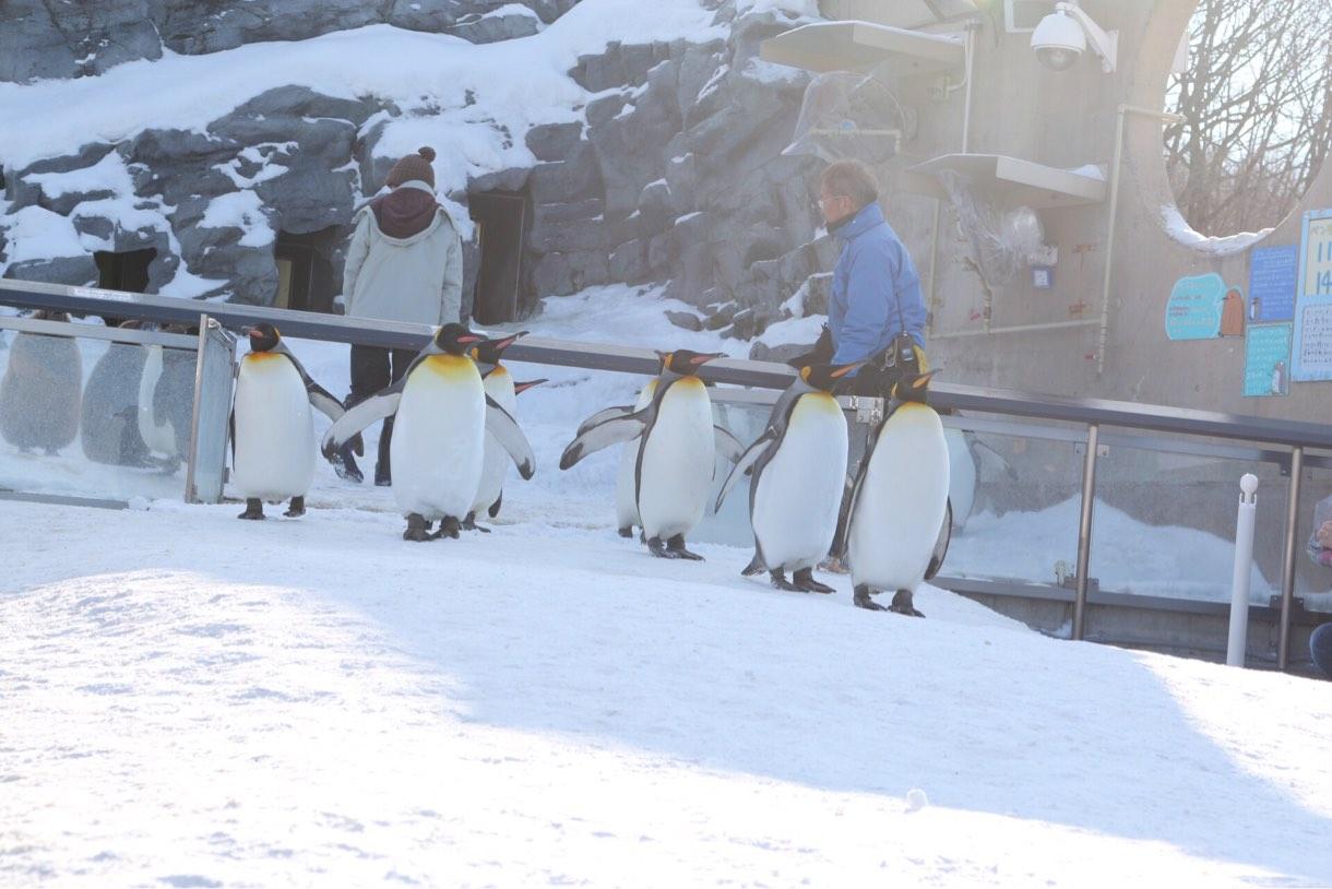 ペンギンのお散歩スタート地点で