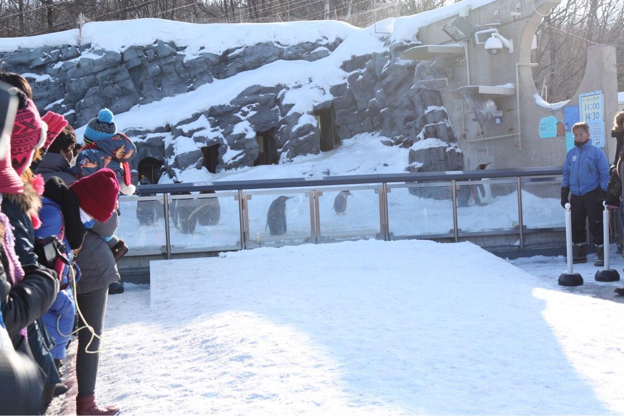 可愛いペンギンを見るために30分待機