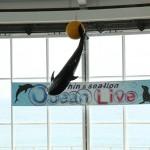 [Å] アシカとイルカのコラボショーが珍しい「アクアワールド茨城県大洗水族館」で写真撮ってきた!