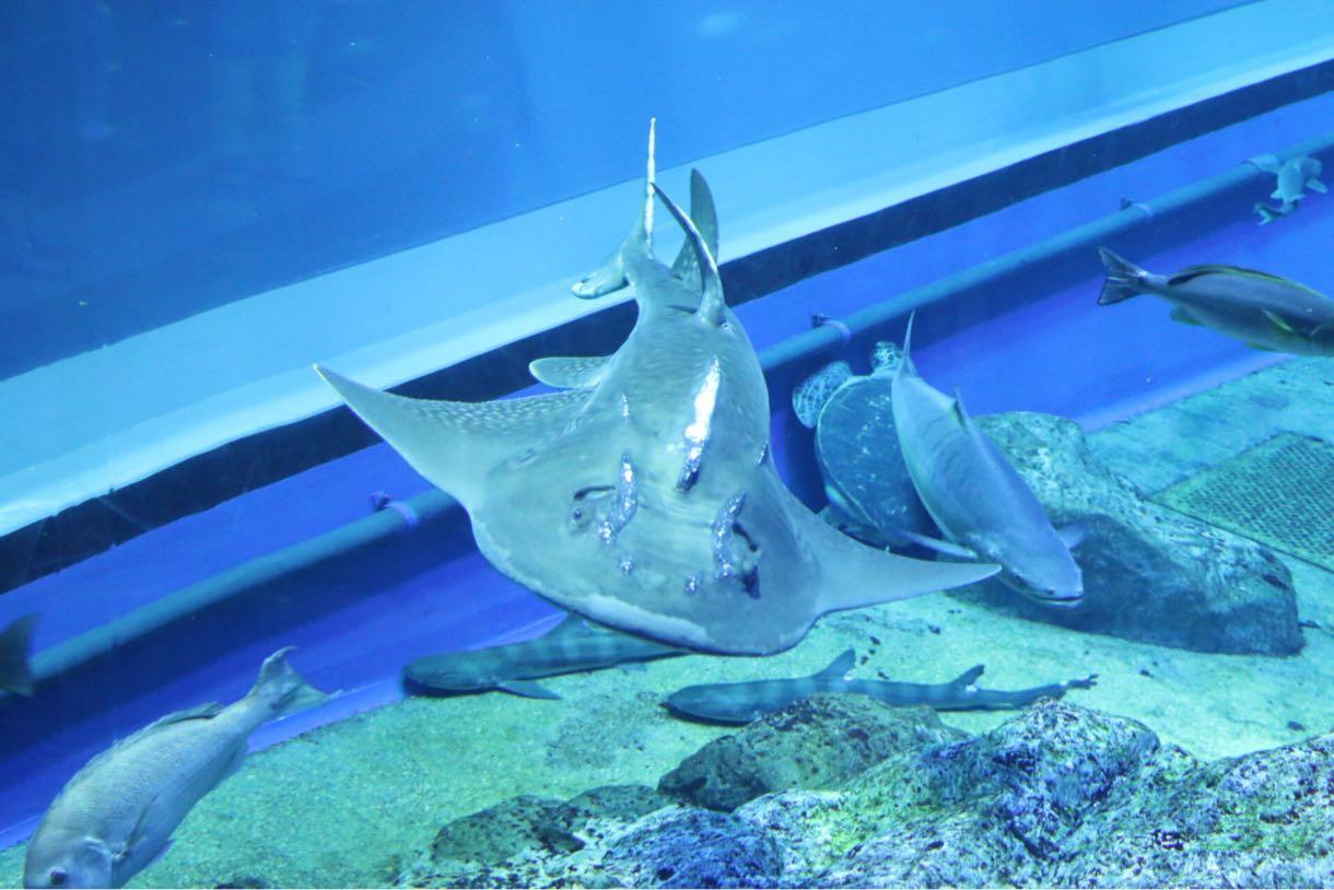 うわさのサメ