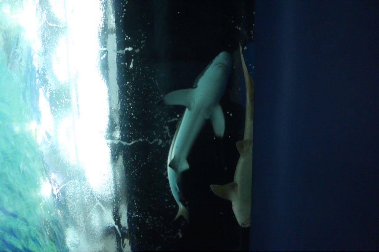 サメを真下から