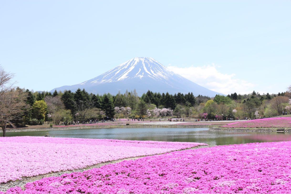 富士山と湖と芝桜