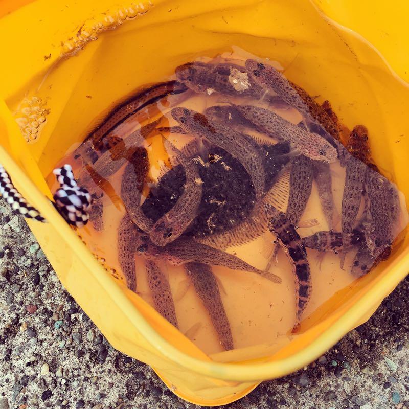 2014年の三崎釣り成果