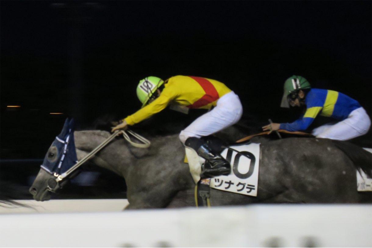 走っている馬の撮影