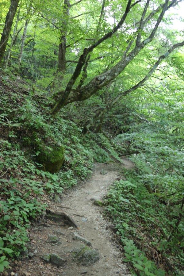 尾白川渓谷までの山道