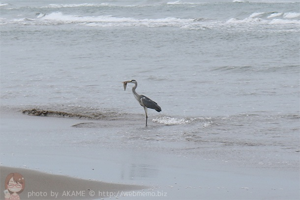2日目に見たドライブウェイと海にいた鳥