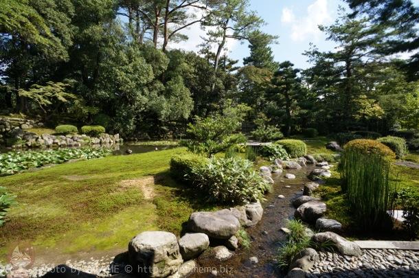 時雨亭の縁側から見える庭の景色