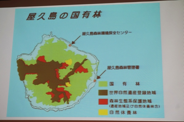 屋久島の国有林