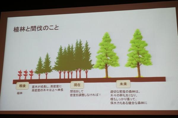 崩林と間伐について