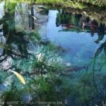 [Å] 山梨観光「忍野八海」の美しすぎる水は絶対に生で見るべき!日本名水百選認定も納得