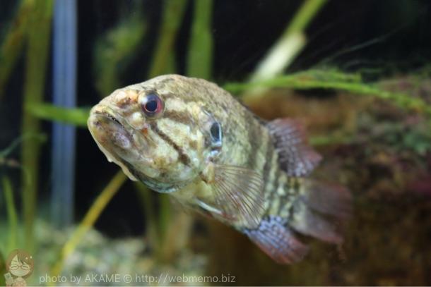 山梨県 森の中の水族館。淡水魚専門水族館「富士湧水の里水族館」