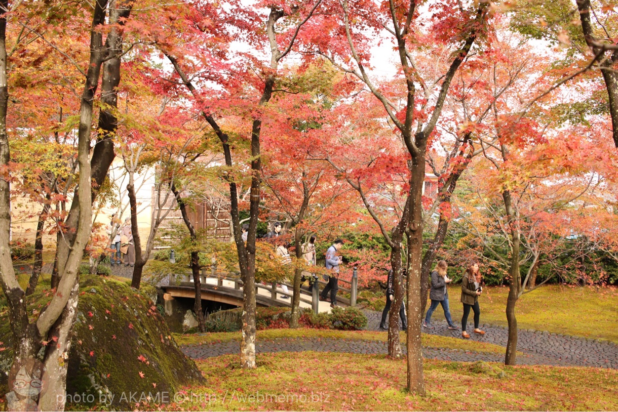 箱根美術館 紅葉の様子