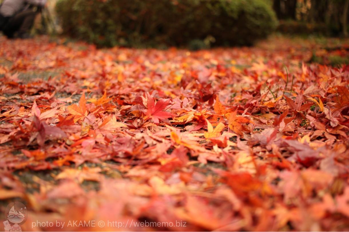 紅葉の赤いじゅうたん