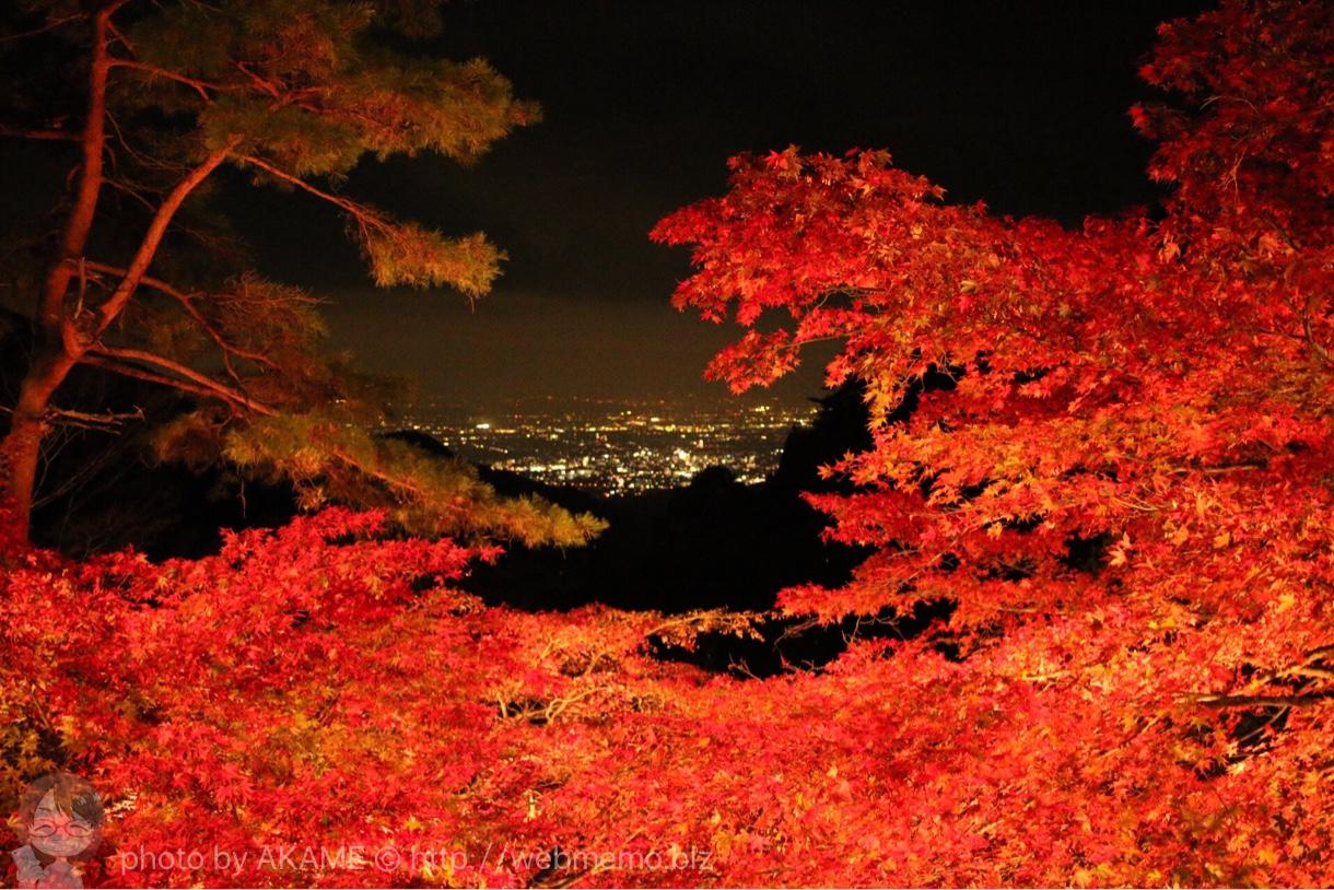 ライトアップ紅葉と夜景