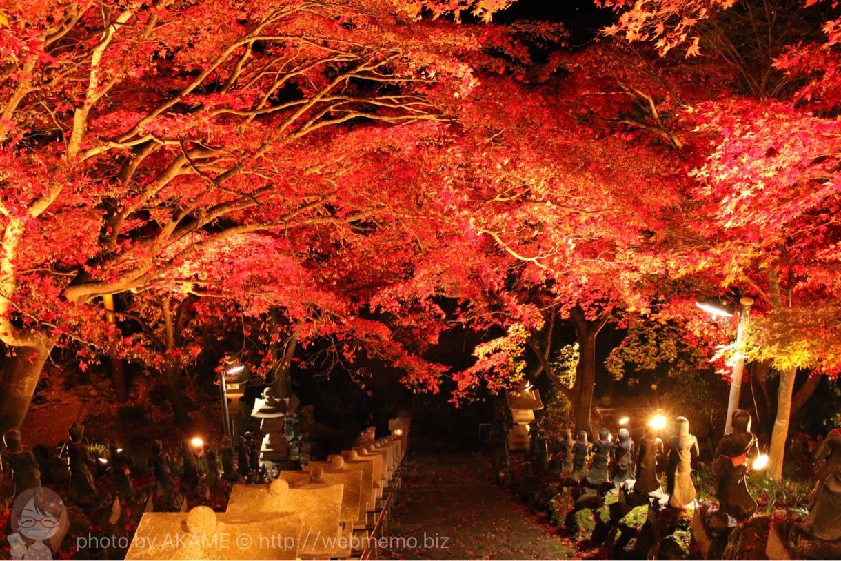 大山寺から見たライトアップ紅葉