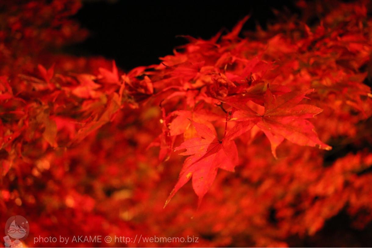 燃えるように真っ赤な紅葉