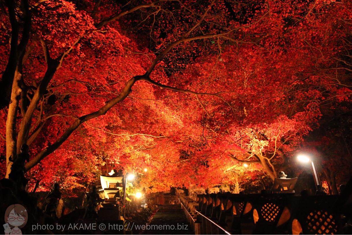 見上げるライトアップ紅葉