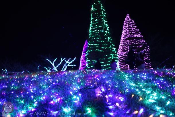 光とツリー