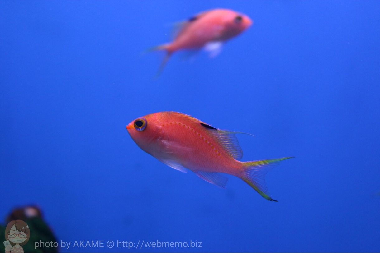 淡島水族館で撮影した写真