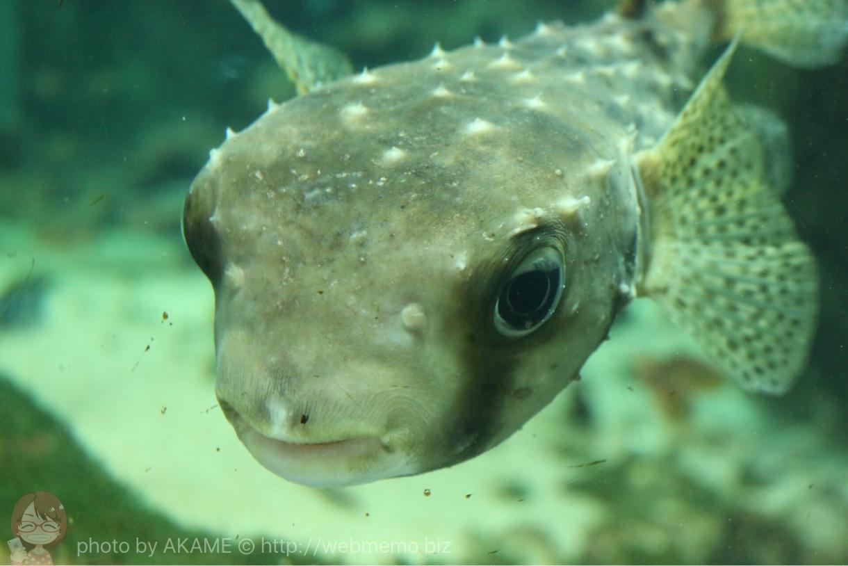 淡島水族館で撮影した写真 上目遣い