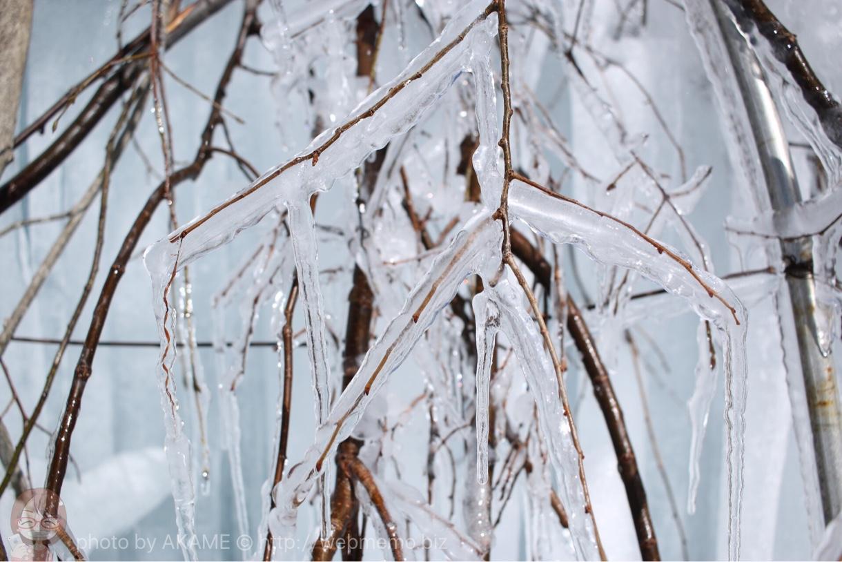 枝に包む氷