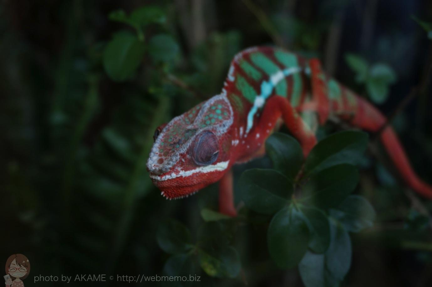 iZoo 展示 カラフルな爬虫類