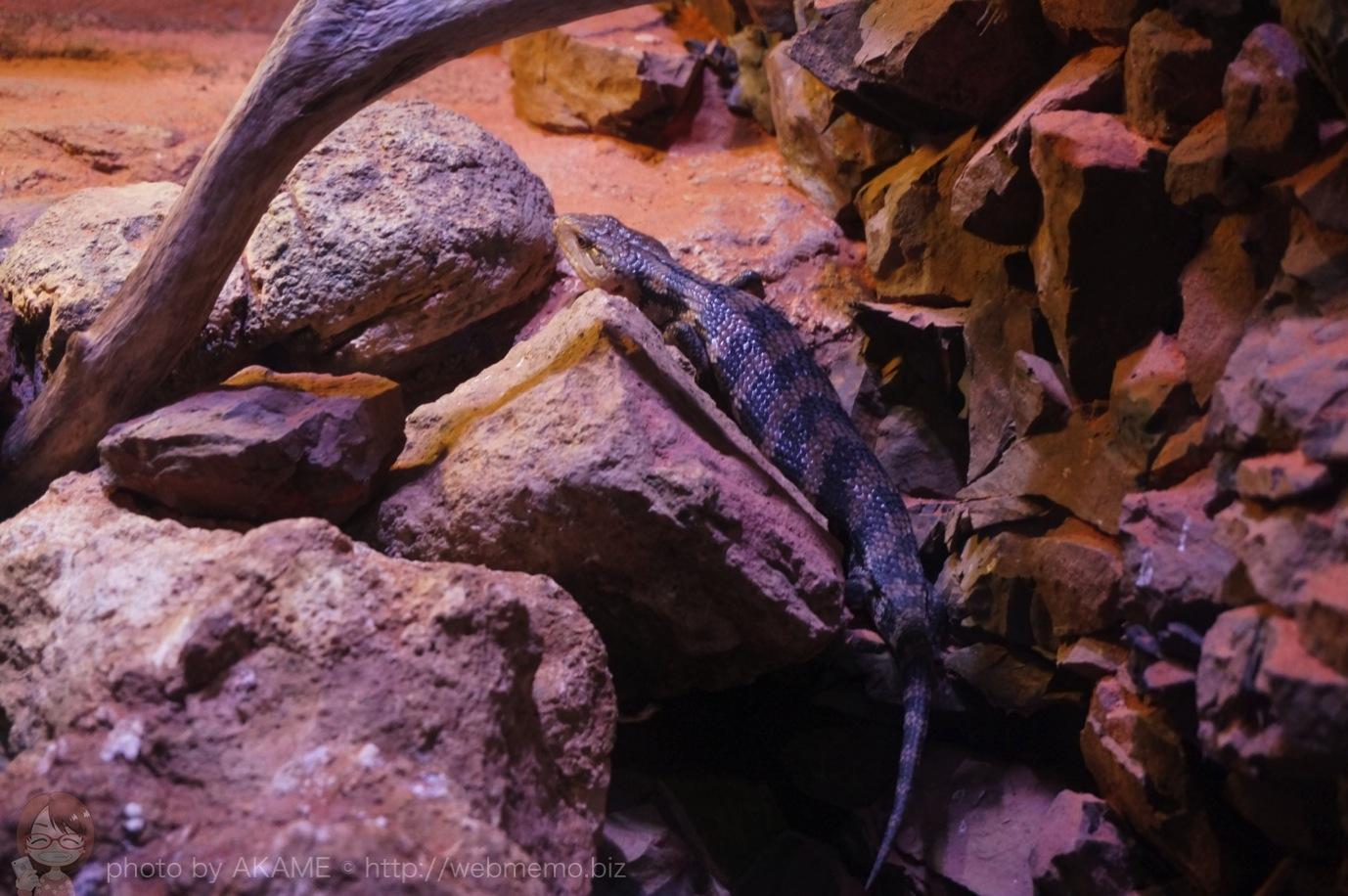 見えにくい爬虫類