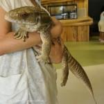 [Å] 日本初!iZoo(イズー)は爬虫類と触れ合える大興奮の体感型動物園 – 伊豆観光