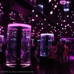 [Å] アクアパーク品川 光と音で創る幻想的水族館が凄い!直感型テーマパークを初体験