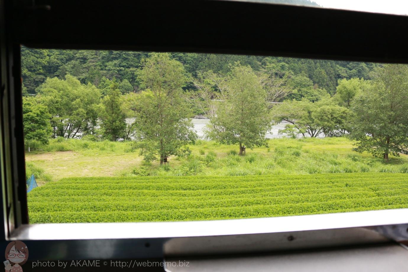 SLからの景色 茶畑