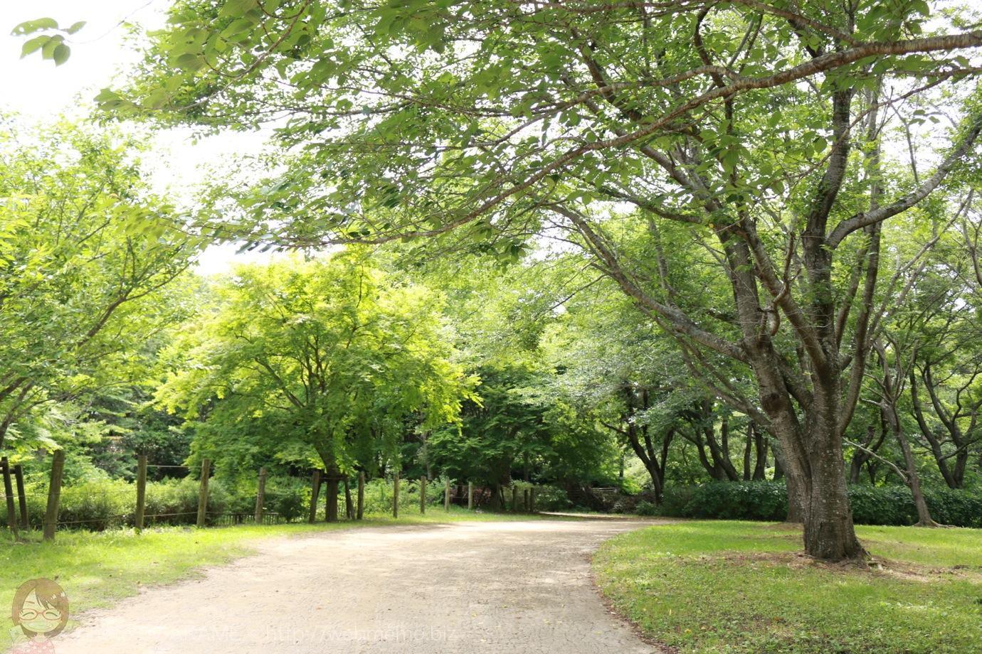 房総のむら 木々に囲まれた通り