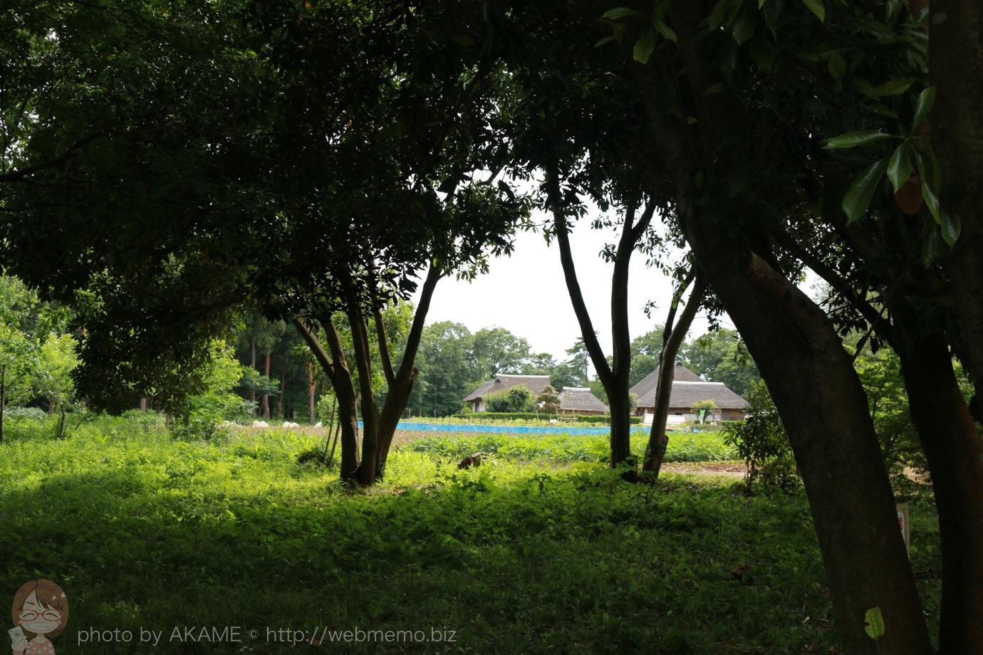 木々の間から見える農家