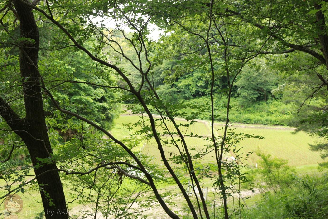 道中 木々から見える水田