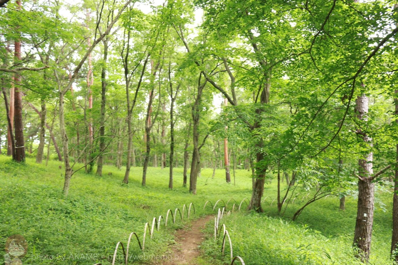 風土記の丘資料館に続く緑